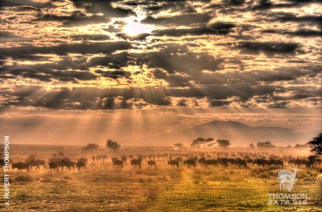 Photo of the Week- Thomson Safaris