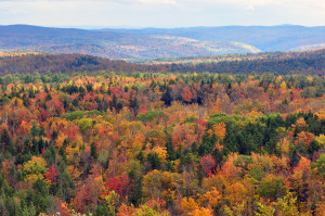 Vermont forest view from Hogback Mountain
